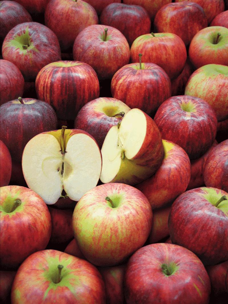 Apples Royal Gala Watermelon Wallpaper Rainbow Find Free HD for Desktop [freshlhys.tk]